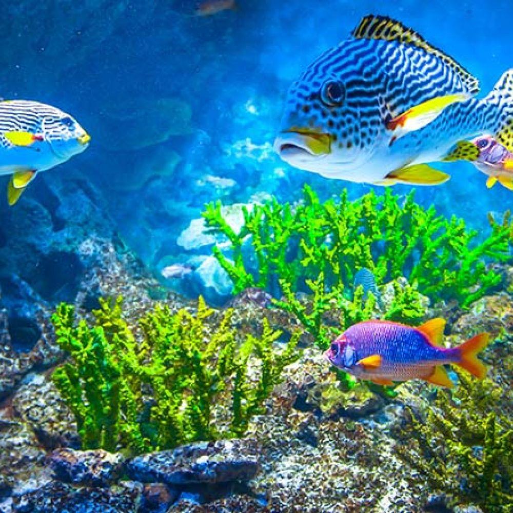 S E A  Aquarium